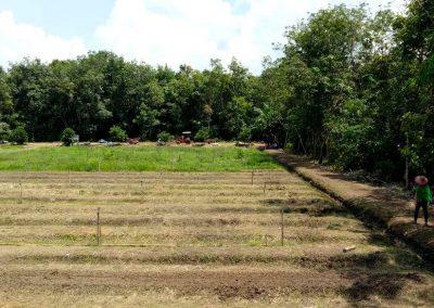 Inovasi PLTB, Desa Anjir Kalampan Sukses Kembangkan Eduwisata Holtikultura