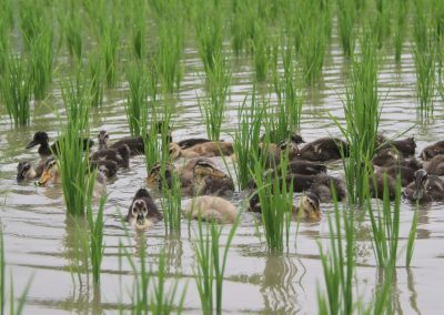 BUMDes Bakti, Lembaga Ekonomi Desa Gambah Dalam Barat yang Sukses Pasarkan Produk Pertanian Organik