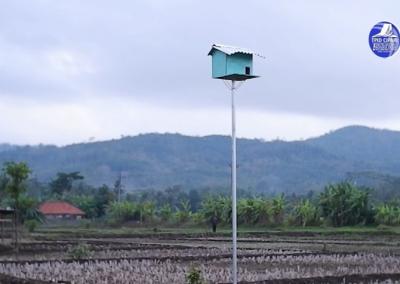 Kurangi Hama Tikus, Desa Cisuru Berinovasi Bangun Rumah Burung Hantu di Area Pertanian
