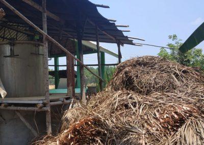 Petani Payakabung Kembangkan Sereh Wangi Sebagai Produk Unggulan Desa